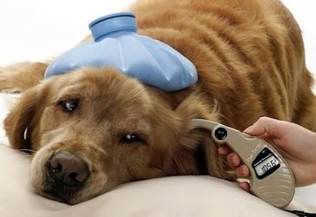 cáncer en mascotas