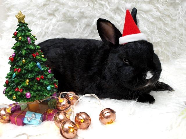 rabbit-1567779_640