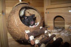 roedor casa